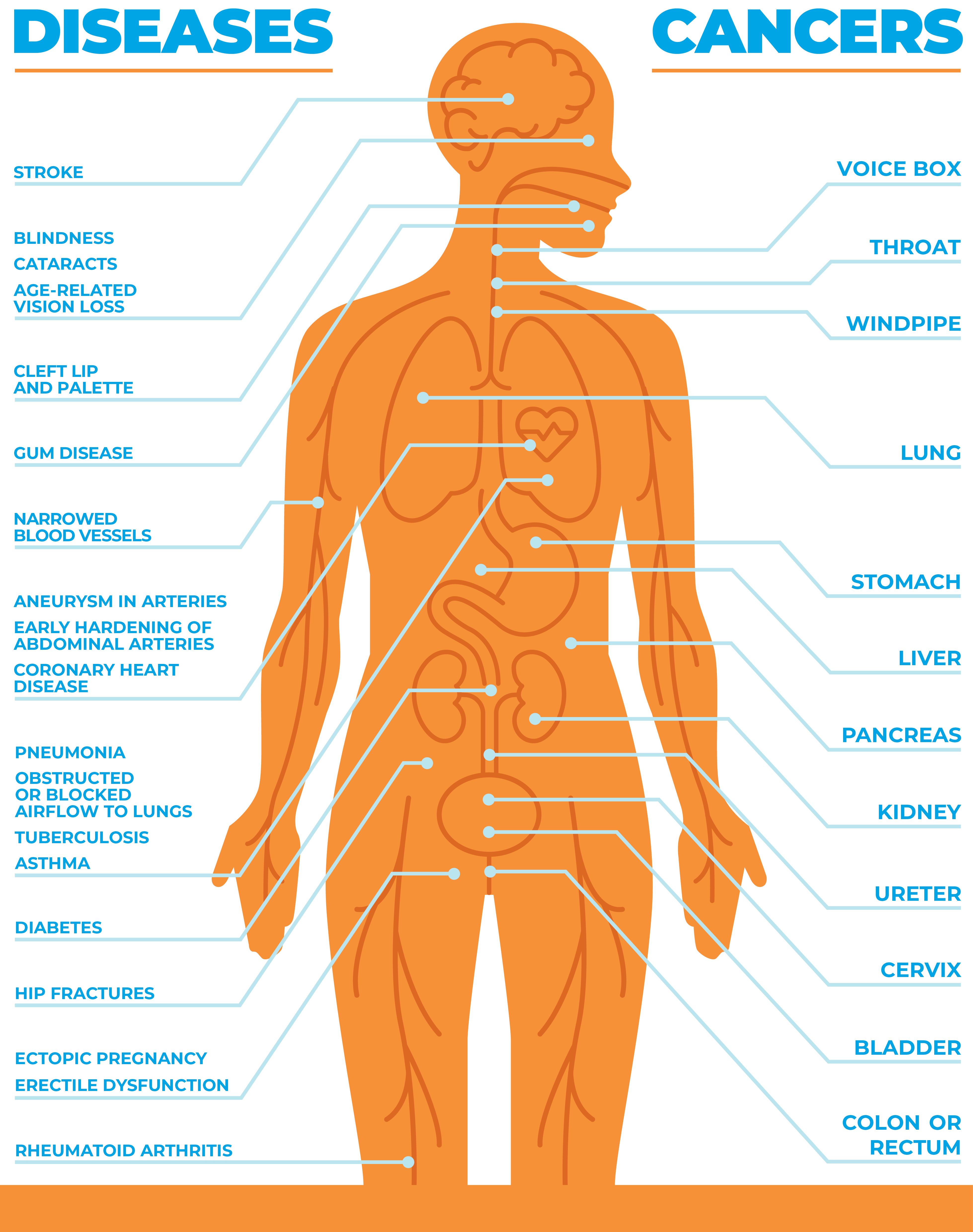 graphic illustration of a body with diseases and cancers caused by tobacco